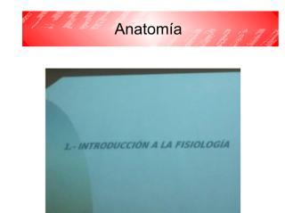 anatomía 2 - copia.pdf
